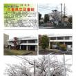 花巡り 「桜-その483」 久喜県立図書館