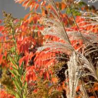 秋色の中でサルビア企画ミーティング