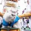 新居浜太鼓祭り2017 山根グランド入場前
