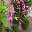 季節の花「大毛蓼 (おおけたで)」