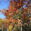 軽井沢熊野神社と見晴台の紅葉2018