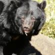熊のおばあちゃん