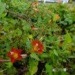 平成29年10月20日(金) 自然園で花見♪