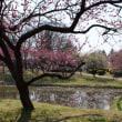 古河の桃まつり