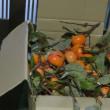 今年も 柿が届きました・・・・
