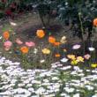 指令執行部会『身近な花』