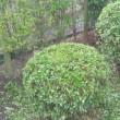 戸塚の豪邸