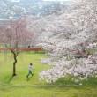 北信濃路の春・・・桜めぐり・・・戸倉宿キティ―パーク
