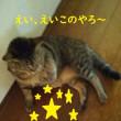 ネコは夢の中で・・・。