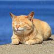 九州E島の猫たち 2018年4月 その9
