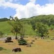 キャンプレポート(20)      広島県北広島市  聖湖キャンプ場 & 深入山キャンプ場