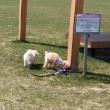 サケふるさと公園におでかけ!