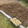 ジャガイモと核廃絶