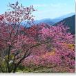 花桃の里Ⅱ