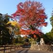 裏英彦山(福岡県)