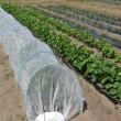枝豆の長期収穫