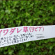 雨の日あれこれ★水仙のまとめ植え