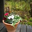 春まで楽しむ寄せ植え展