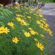 山林の草刈り&庭の花 2017.07.02