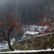 雪と柿の木