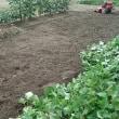畑、場作り