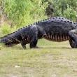 朝の散歩でワニに襲われる日本人 in フロリダ