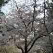 お花見4月1日