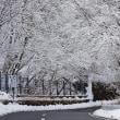 雪景色のいろは坂