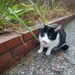 近所の白黒猫さん