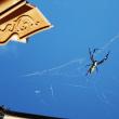雪がチラホラ 電線の裏でがんばる蜘蛛