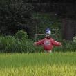 ● 田んぼのある風景