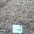 少しずつ、畑も始めました。