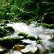 円原川 其の一