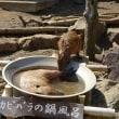 カピバラの鍋風呂