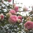 バラの季節 (追記イスパハン)