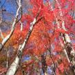 11/15(木)のPACニュース~暮らし&身近な法律・判例の情報