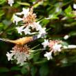 蝶の写真 (今年の夏の整理整頓)