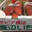 福島のいちご