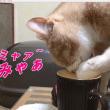 コップの水を飲む猫だいず三態