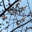 武蔵の国 街ごよみ2/25 若くてキレイ