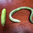 ネパール野菜
