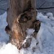 雪のある街角(Ⅴ)