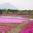 富士芝さくら
