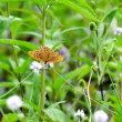 風のガーデン蝶