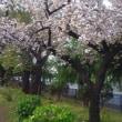 桜は終わりましたが、……~その他にも春が😃~