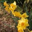 花を添えた 金色と協力 締めくくり クロジ(初めて知った鳥)