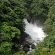 水の島・屋久島を体感!【白谷雲水峡ツアーと里の観光】