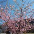 仙台でも桜咲く