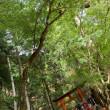 秋の京都スペシャル2daysを終えて