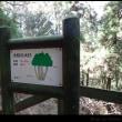 若杉山に登ってみた